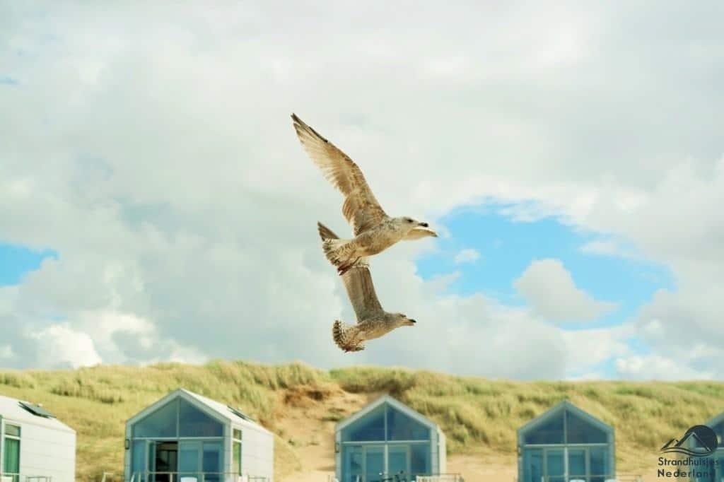 Meeuwen bij strandhuisjes Julianadorp