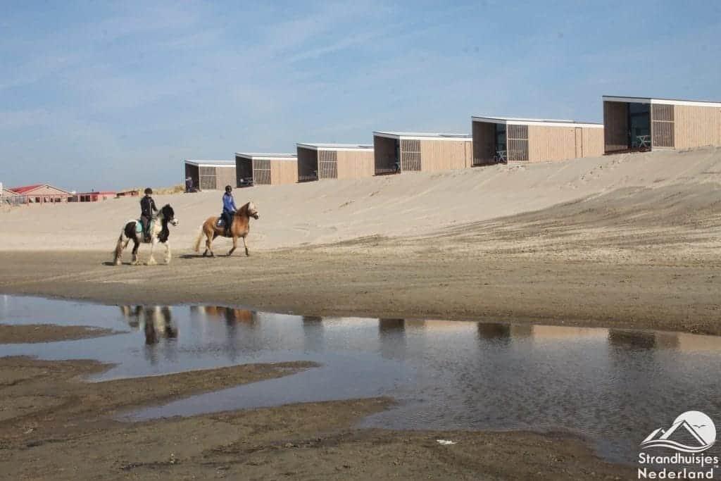 Paarden op het strand
