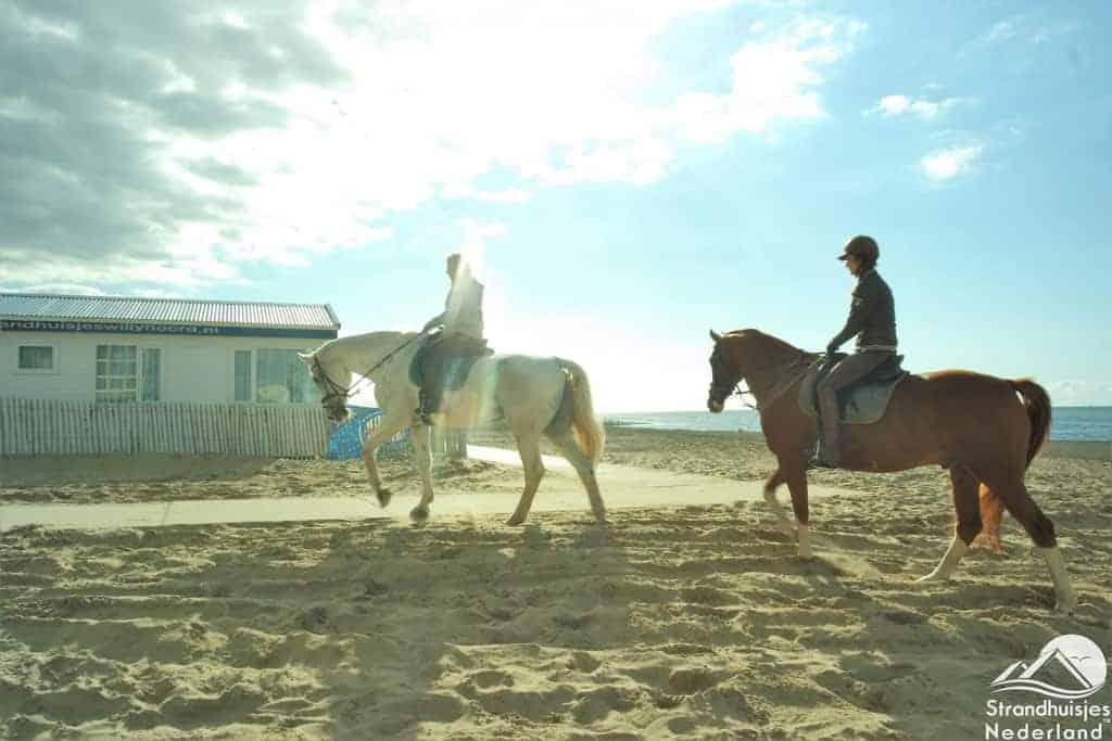 Paarden voor strandhuisjes Katwijk